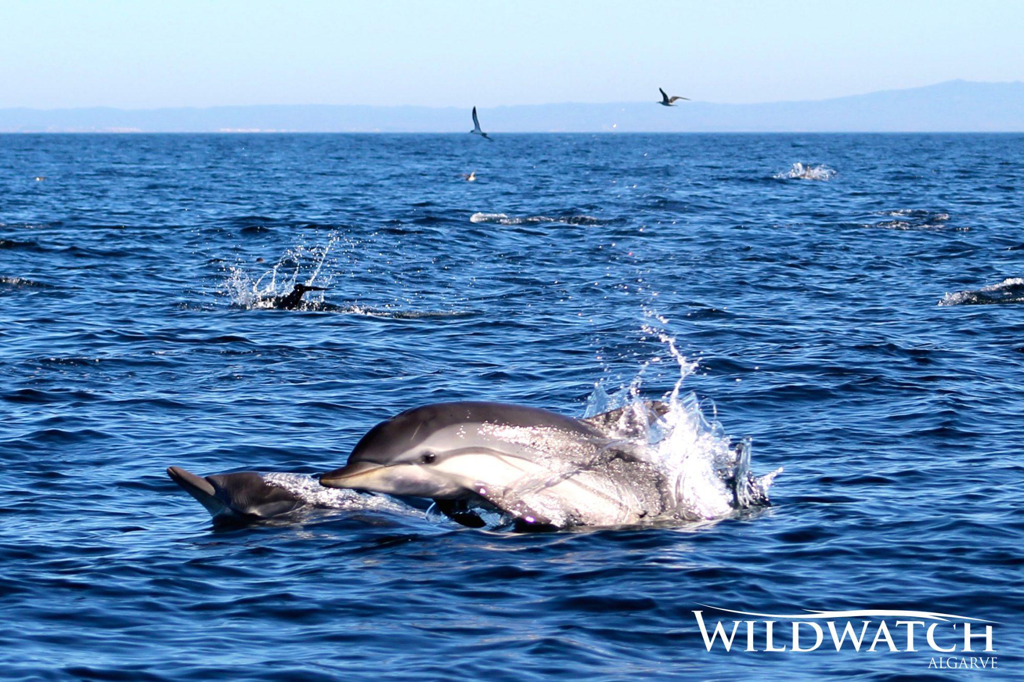 Thinks to do- Wild Watch Ferragudo western Algarve- Enneking Premium Rentals